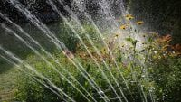 HONNA Watering Restrictions
